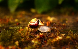 """Flowers and Gardens 1st Prize: """"Snail"""" by Jasmine Jacobs"""