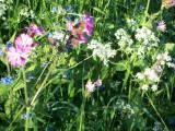 Flower Arranging Fun inSeptember