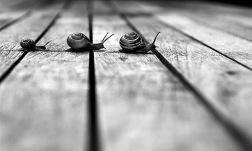 snail b&w